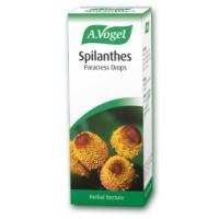 Spilanthes Paracress (Oleracea) 50ml