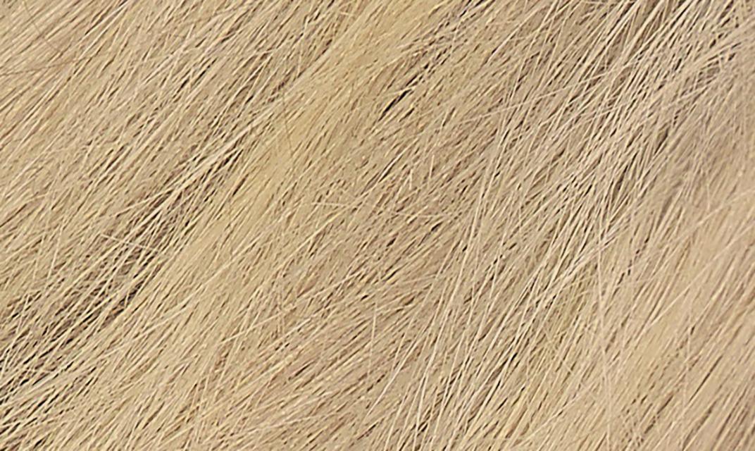 9N Honey Blonde