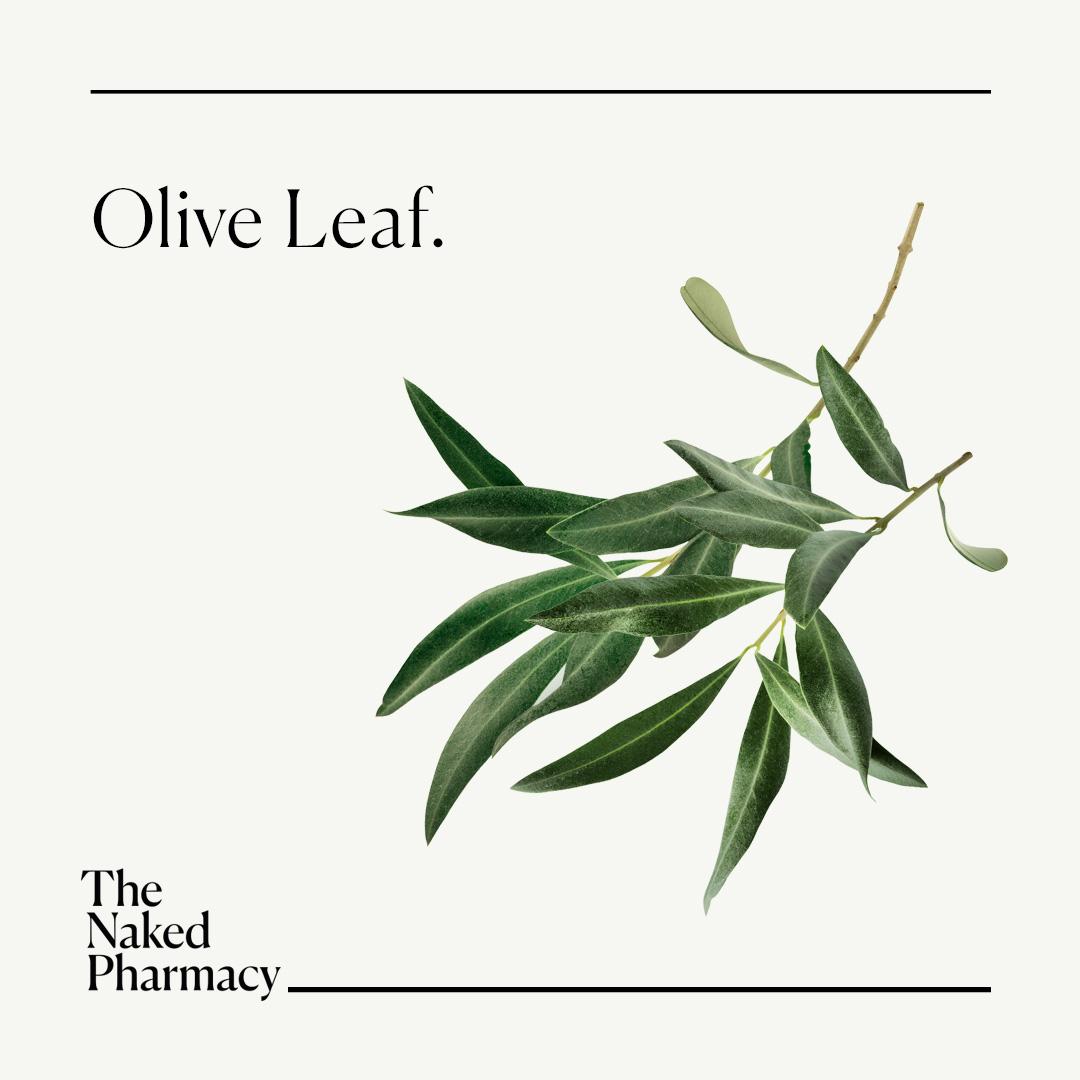 Olive Leaf 60's