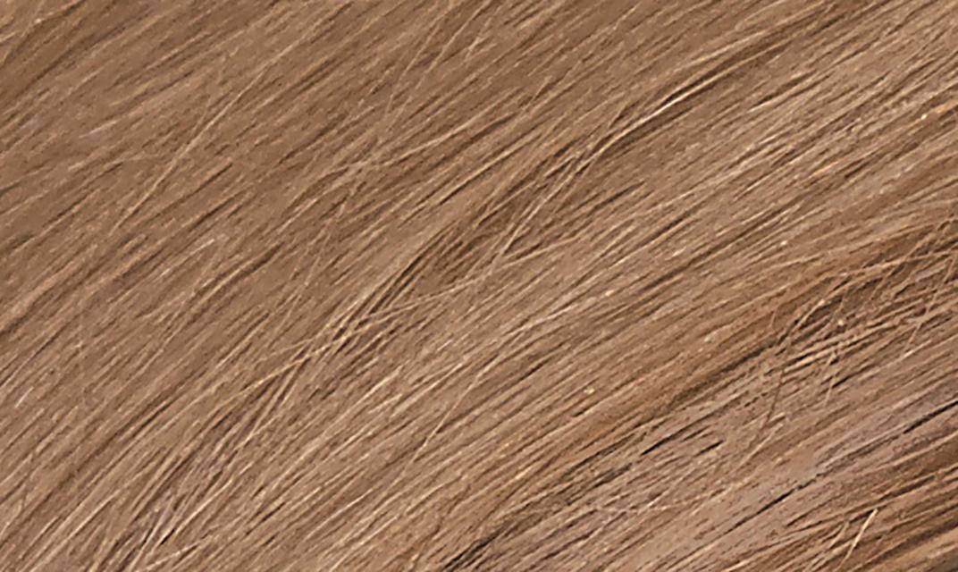 8G Sandy Golden Blonde