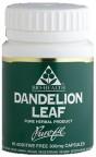 Dandelion Leaf  60's