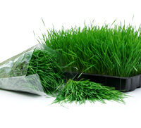 wheatgrass-tray-bag